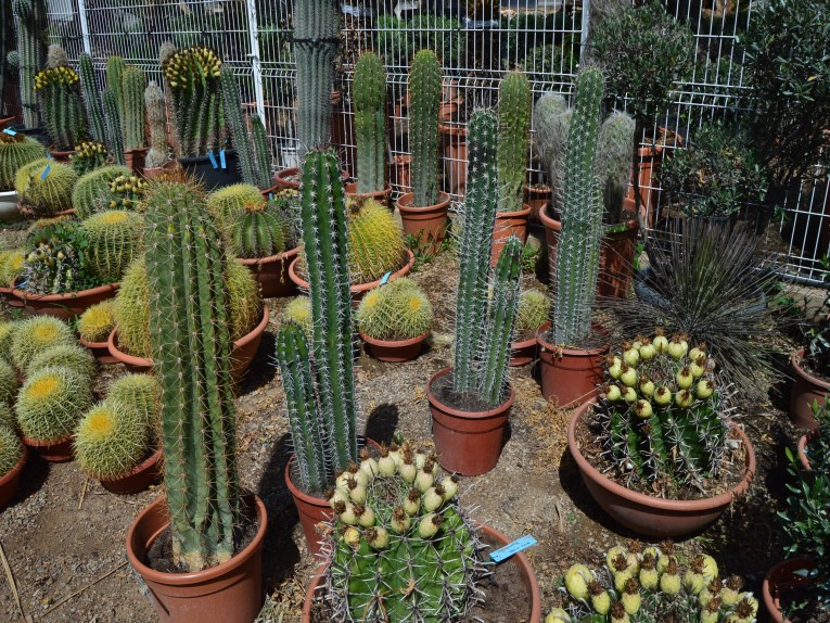 Cactus for Viveros de arboles en madrid